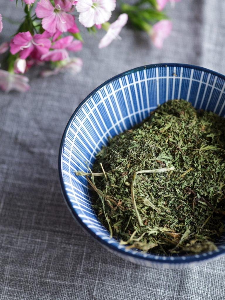 Les bienfaits de Artemisia Annua